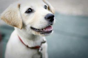 犬も歯周病になるの?~犬のお口のトラブルを知ろう~